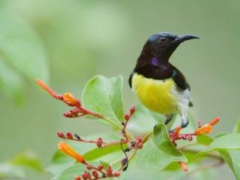 Bird-watching-in-kandy-sri-lanka