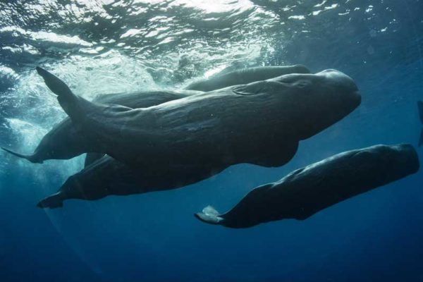blue-whales-in-sri-lanka